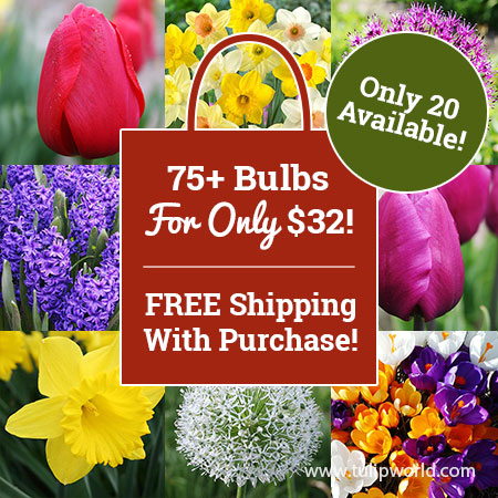 Spring Blooming Bonanza Grab Bag