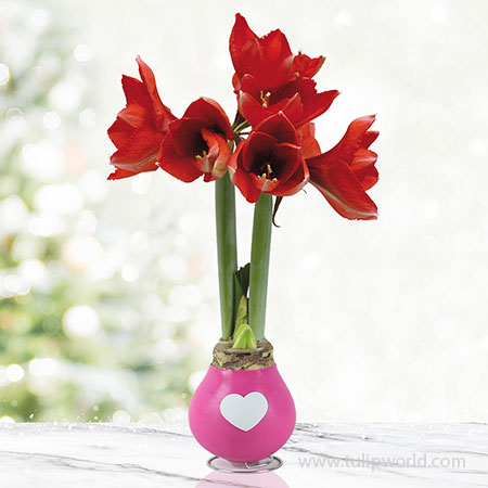 Tickled Pink Waxed Amaryllis Pink Waxed Amaryllis, Unique Holiday Gift, Hand-Dipped Wax Covered Bulb, Holiday Flowers