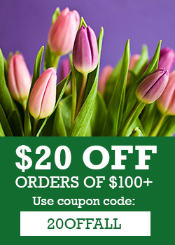 Enjoy $20 OFF Orders of $100 w/Code!
