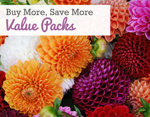 Spring Planted Value Packs