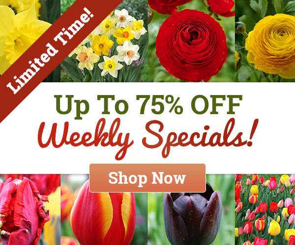 Weekly Specials Up To 75% OFF!