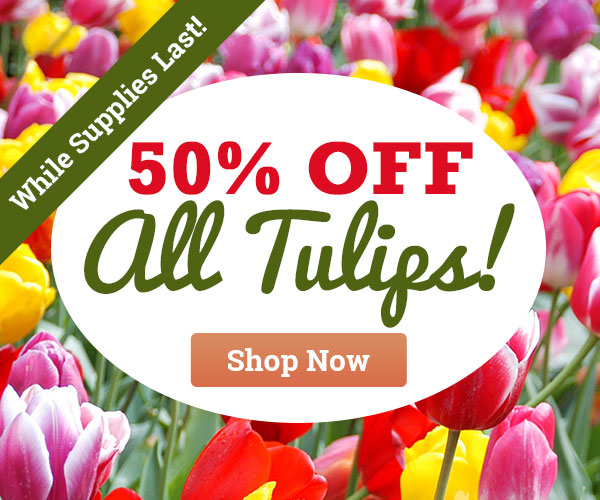 50% OFF ALL Tulips - While Supplies Last!