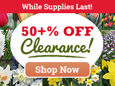 50% OFF Fall Clearance Sale!