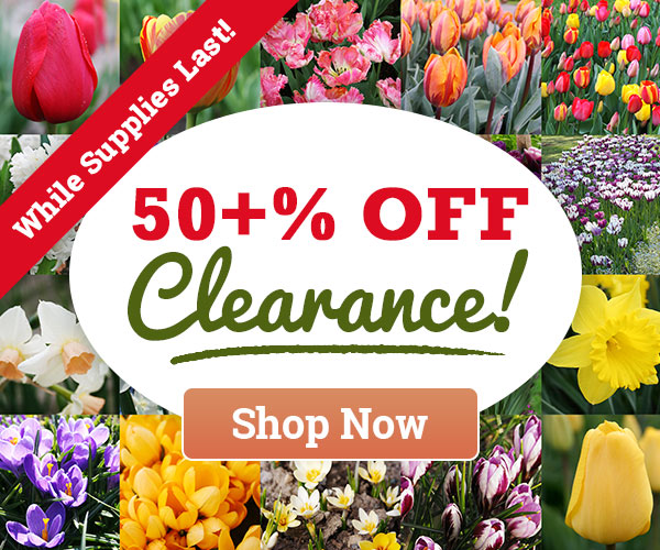 50% OFF CLEARANCE SALE - While Supplies Last!