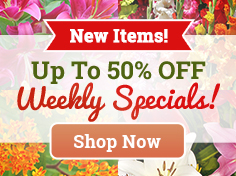 Up To 50% OFF Spring Bulb Specials!
