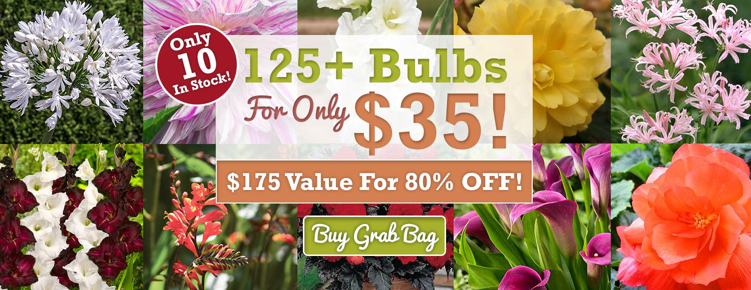 125+ Bulbs For Only $35!