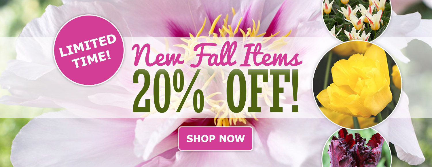 20% OFF New Fall Items