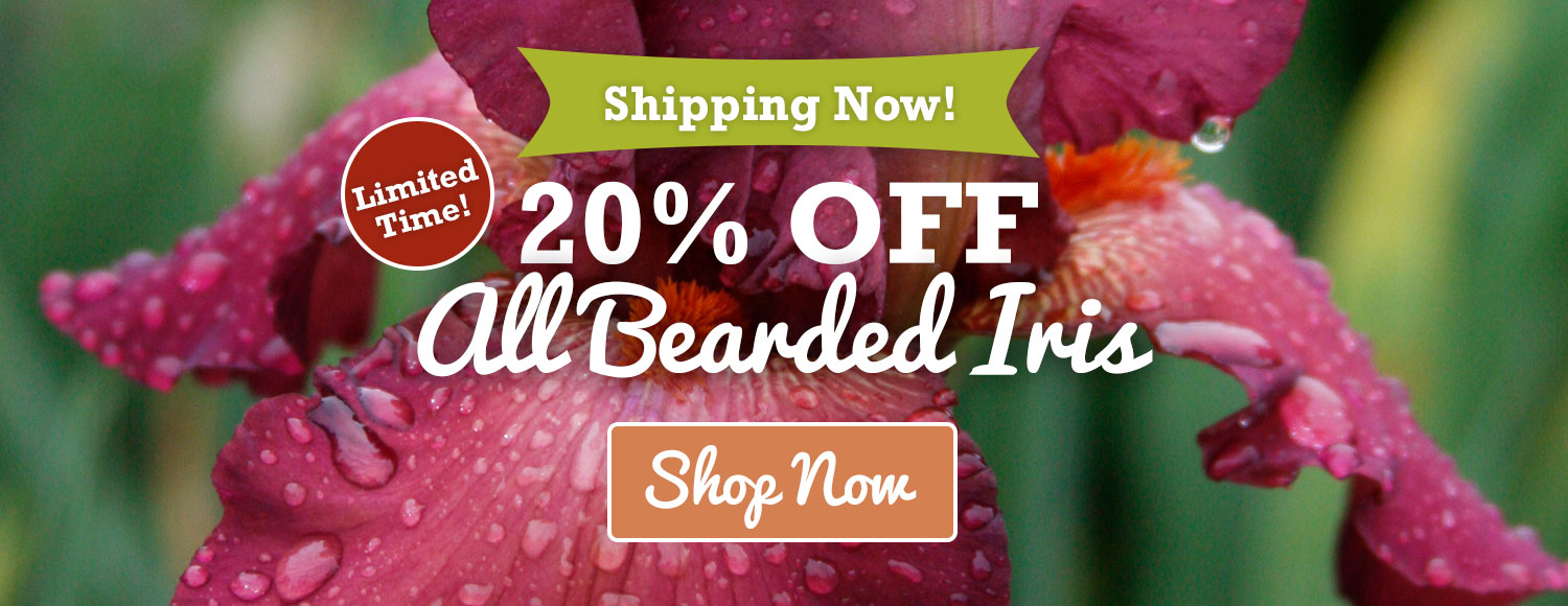 20% OFF Bearded Iris - Shipping Now!