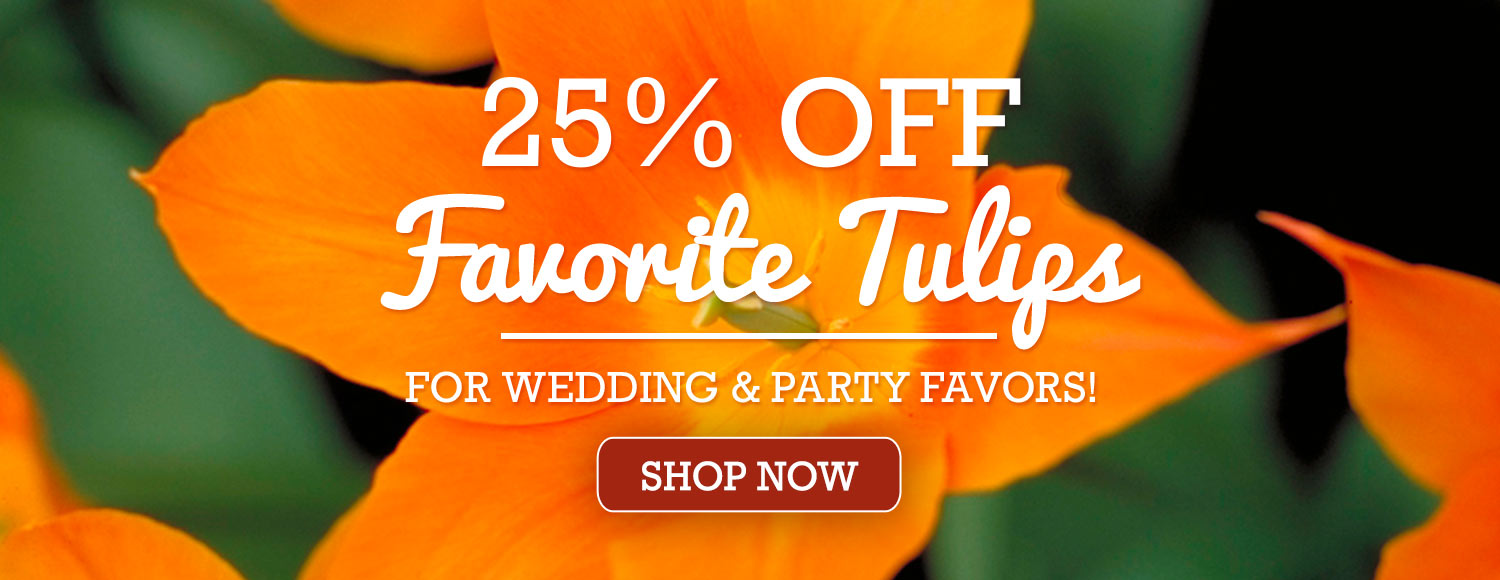 25% OFF Wedding and Party Favor Tulips!