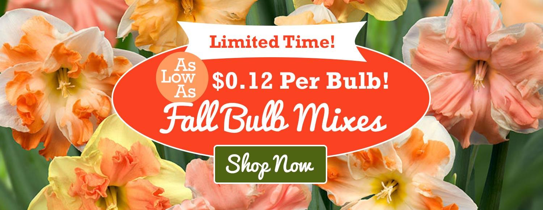 Tulip world 40 off bulb mixes izmirmasajfo
