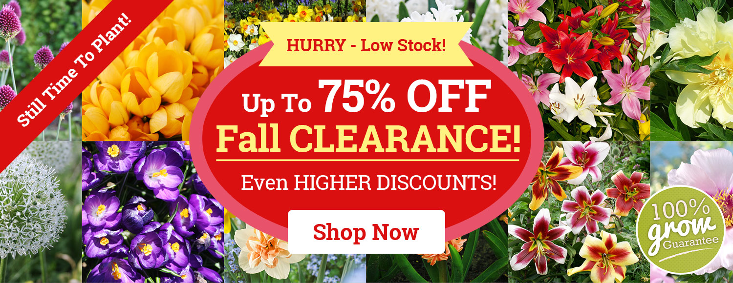 75% OFF Fall Planted Bulbs and Perennials!