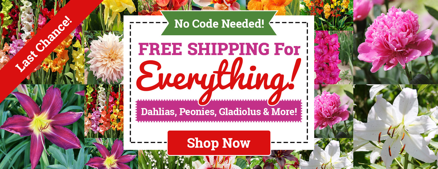 FREE SHIPPING ON ALL ORDERS - NO MINIMUM!