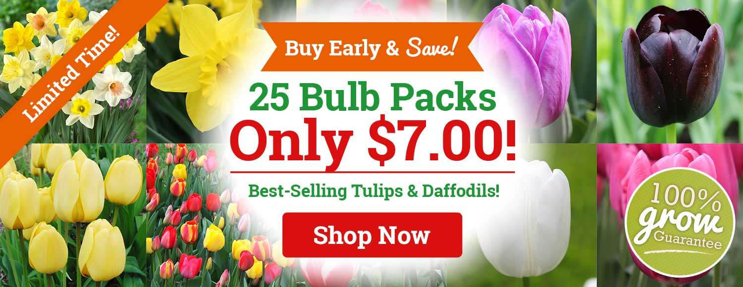 ONLY $7: Tulips & Daffodil 25 Packs!