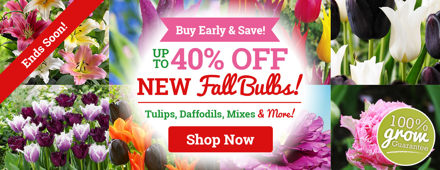Up To 40% OFF ALL NEW Fall Bulbs!