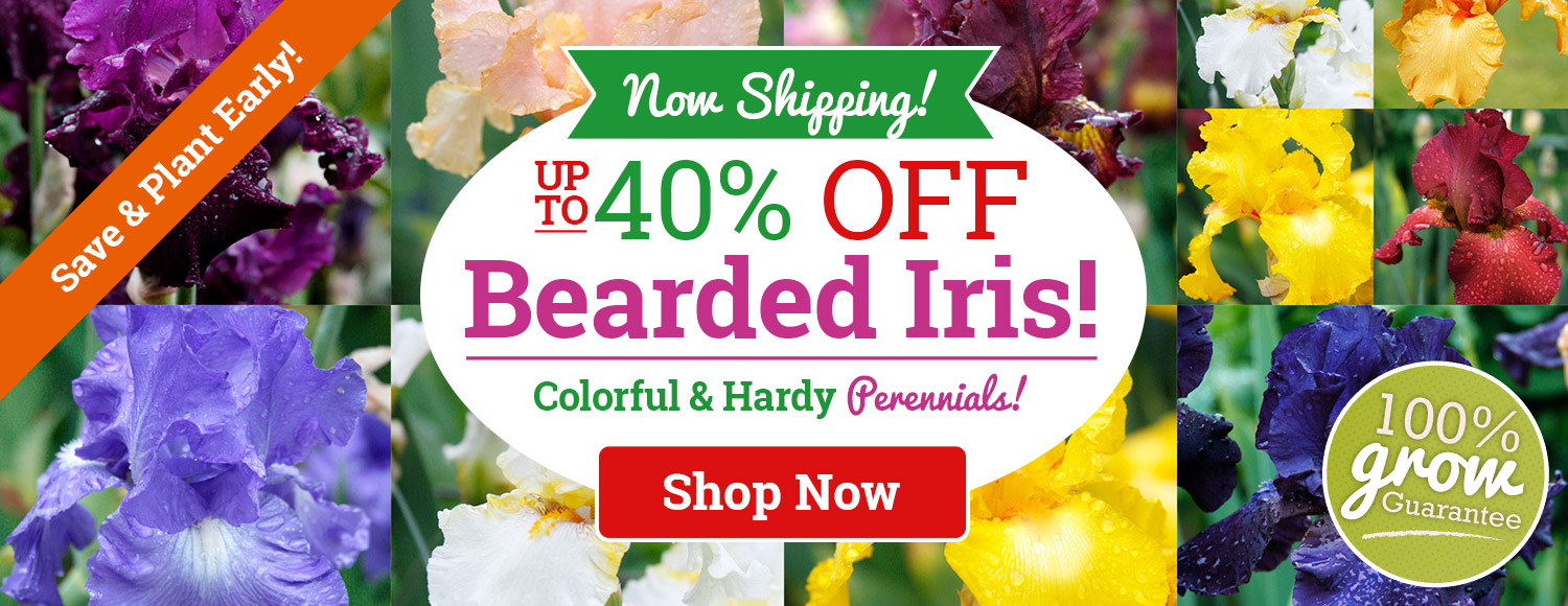 NOW SHIPPING: Up To 40% OFF ALL Bearded Iris!