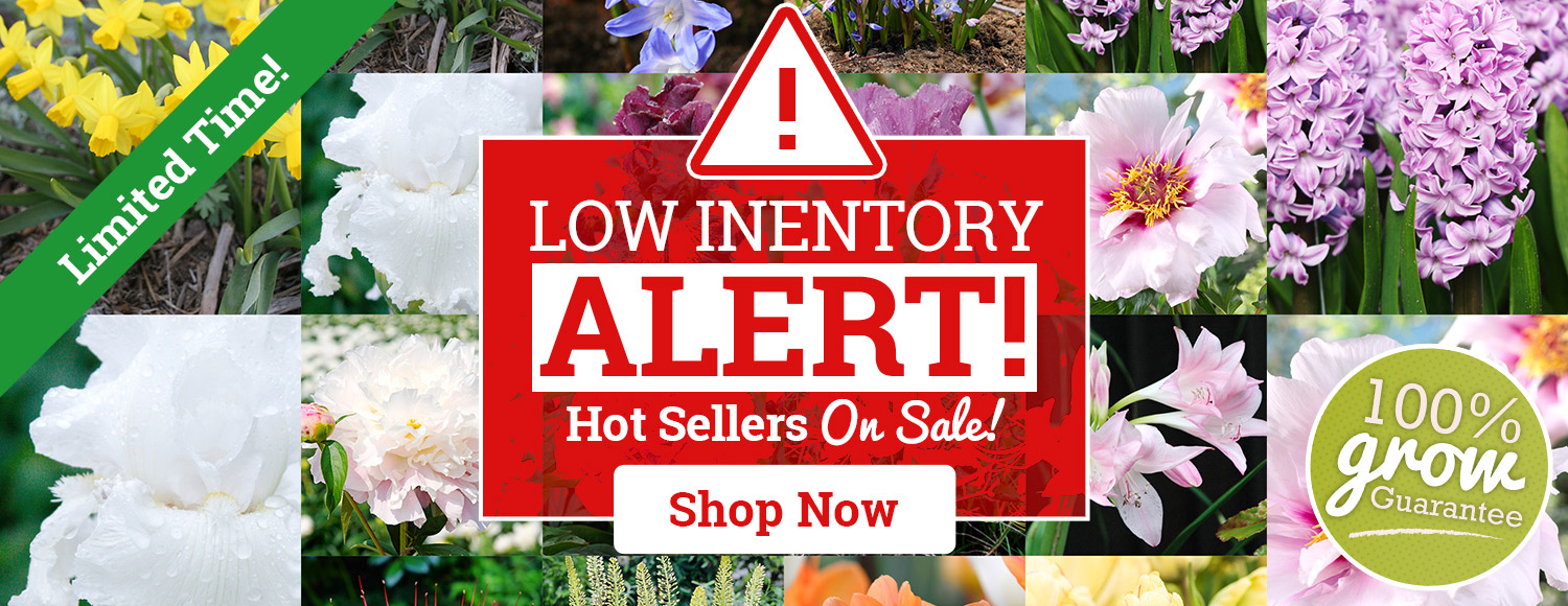 INVENTORY ALERT: Low Stock Hot Sellers!