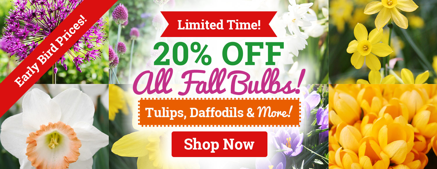 20% OFF ALL Fall Bulbs & Perennials!