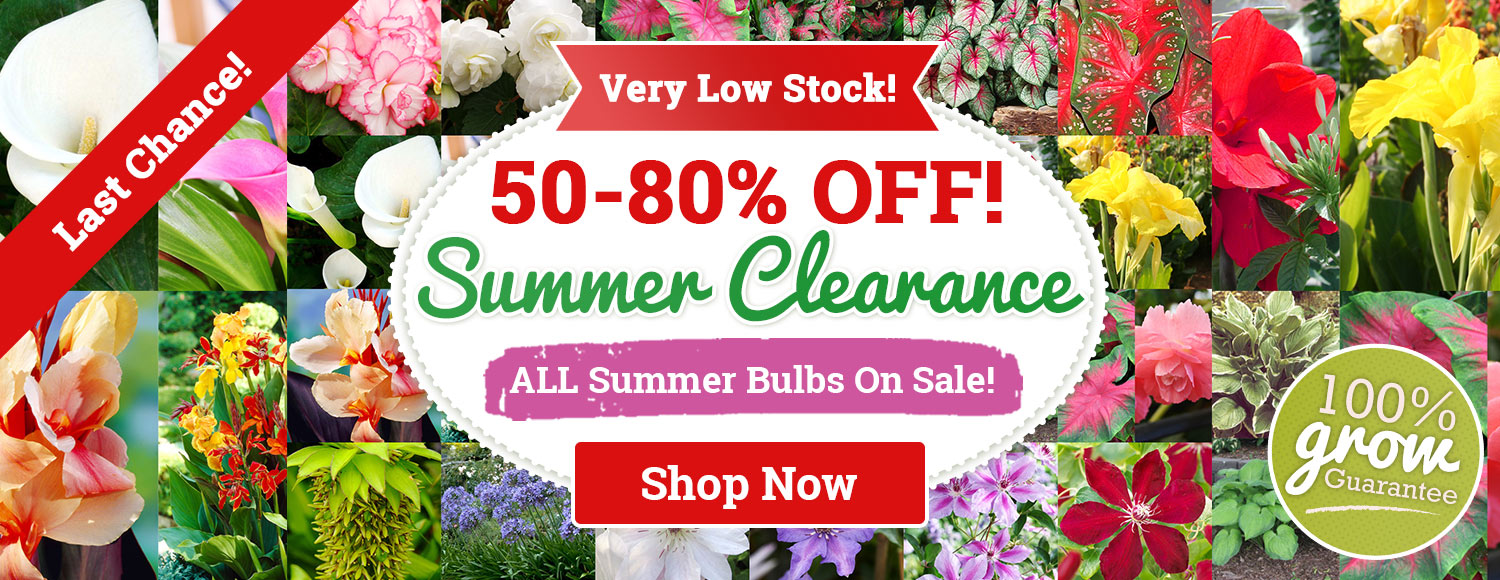 SUMMER CLEARANCE: 50-80% OFF ALL SUMMER Bulbs!