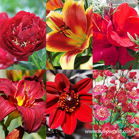 All Red Summer Collection  red perennials, red flowers that bloom in summer, perennials that are red, red flowering perennials, red blooming flower bulbs