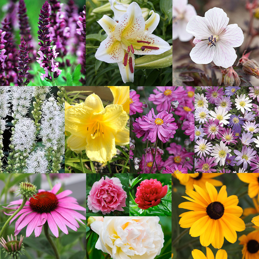 All Season Blooming Perennial Collection