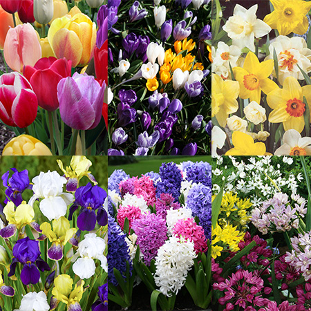 All Spring Blooms Value Collection