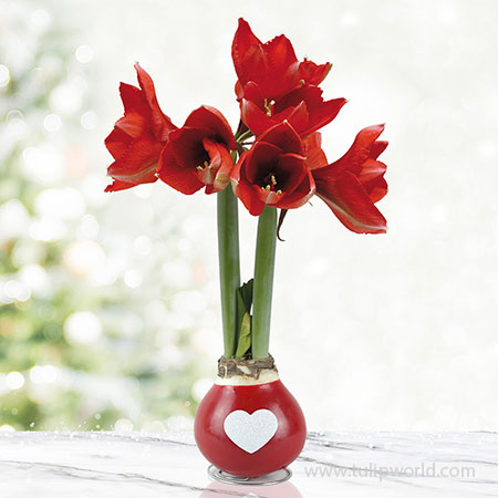 Be Mine Waxed Amaryllis Red Waxed Amaryllis, Unique Holiday Gift, Hand-Dipped Wax Covered Bulb, Holiday Flowers