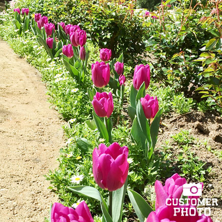 Don Quichotte Tulip Super Pack - 38297