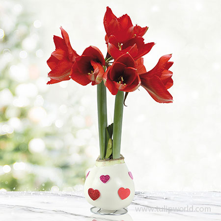 Love Is In The Air Waxed Amaryllis White Waxed Amaryllis, Unique Holiday Gift, Hand-Dipped Wax Covered Bulb, Holiday Flowers