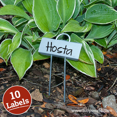 Miniature Plant Labels