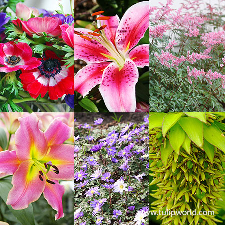Sensational Summer Blooms Collection summer blooming flowers, flowers that bloom in summer, lily bulbs for sale online, oriental lily bulbs for sale, buy lily bulbs online, buy bare root perennials online