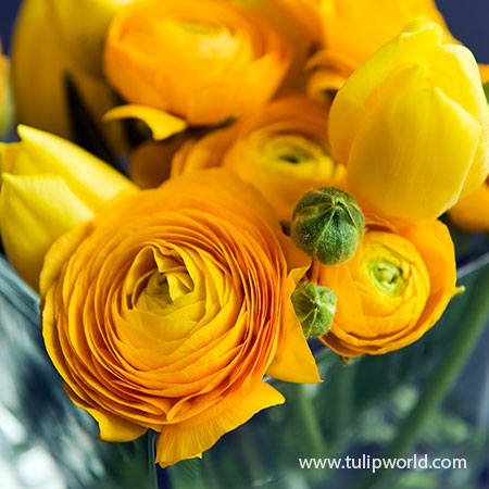 Yellow Ranunculus - 37125