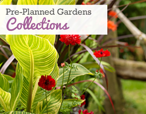 Spring Planted Collections