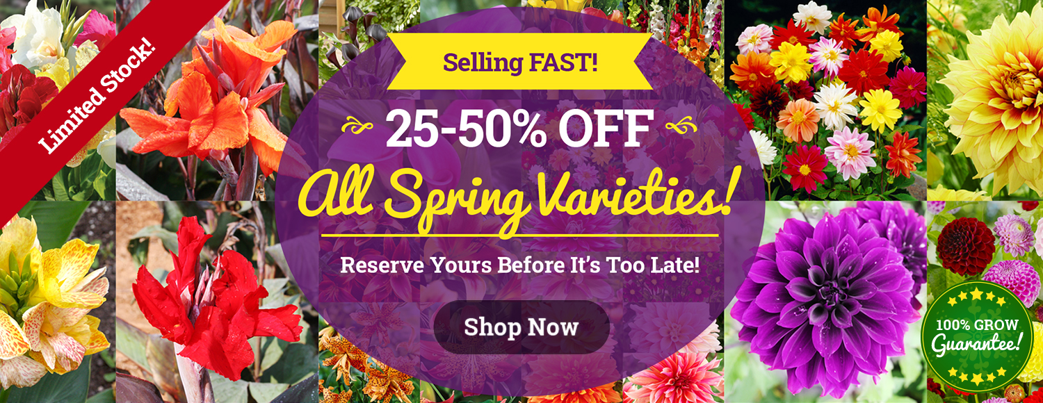 25-50% OFF ALL Spring Bulbs!