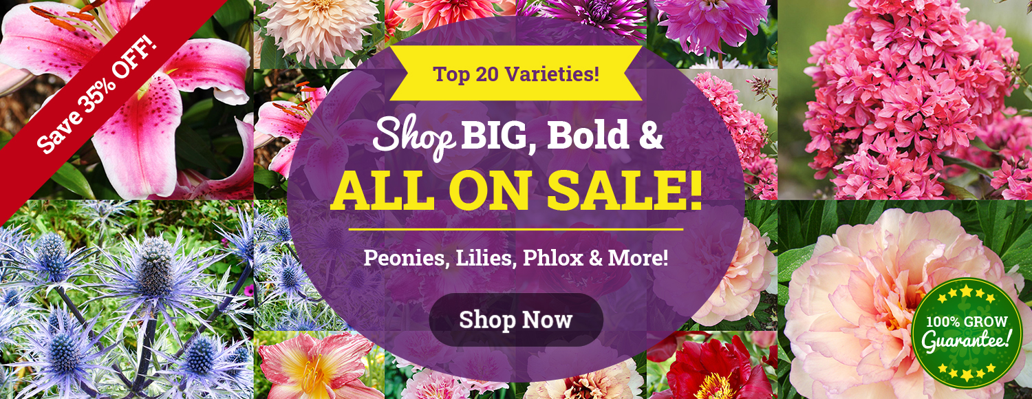 BIG BOLD BLOOMS: 35% OFF 20 Top Picks!