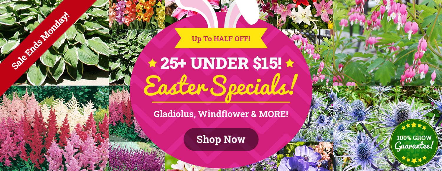 EASTER DEALS: 25+ Varieties Under $15!