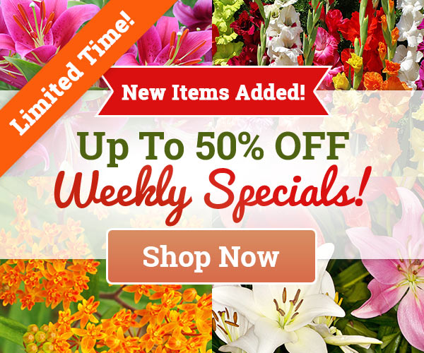 Weekly Specials Up To 50% OFF!