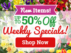 Up To 50% OFF Fall Bulb Specials!