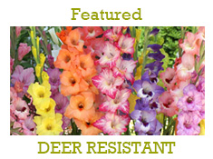 Deer Resistant Spring Bulbs