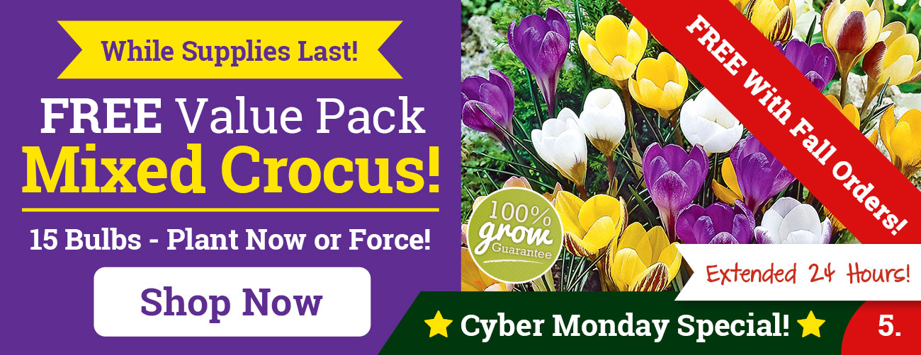 FREE Mixed Crocus Value Pack With Your Fall Order!