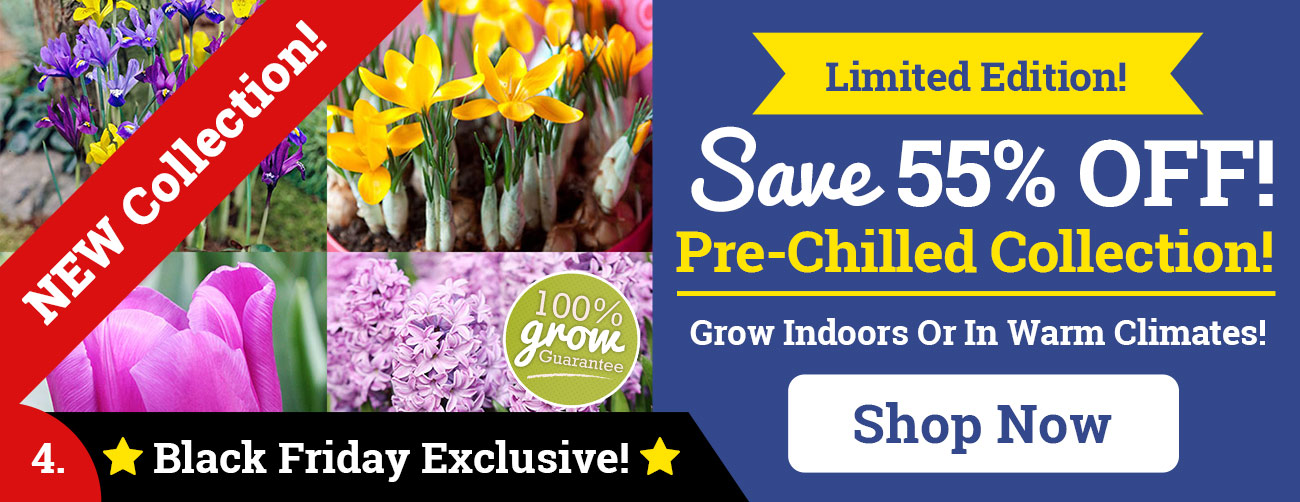 Save 50% OFF NEW Pre-Chilled Collection!