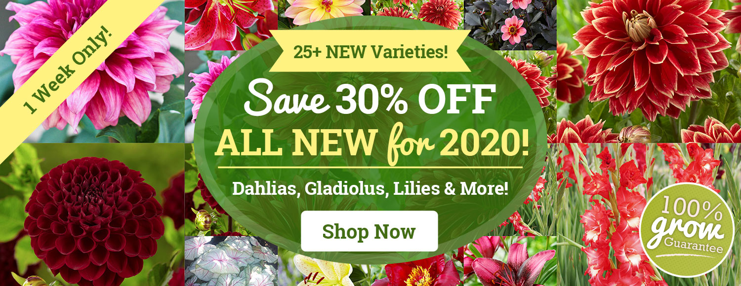30% OFF ALL NEW For 2020 Spring Planted Bulbs!