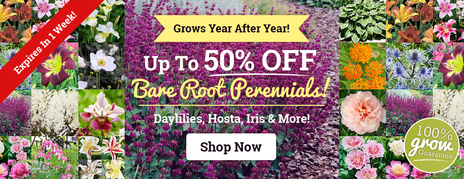 Up To 50% OFF Spring Perennials!