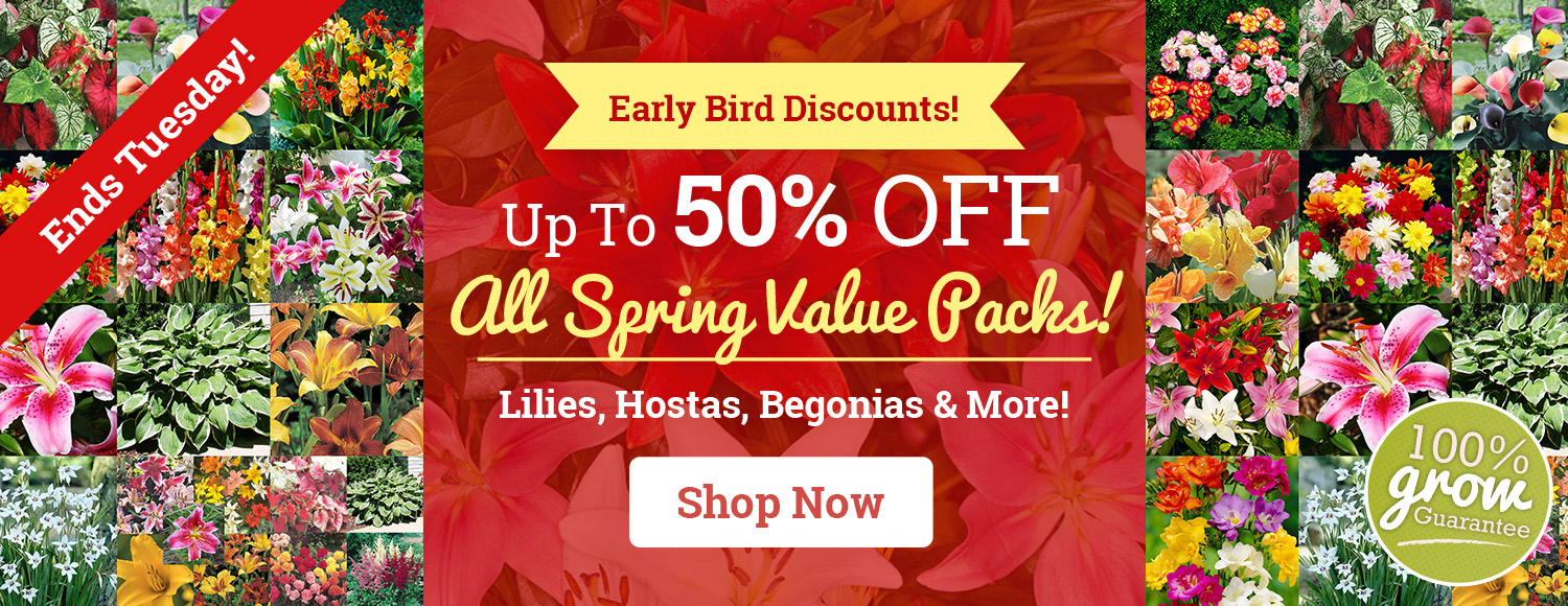 Up To 50% OFF ALL Spring Value Packs!