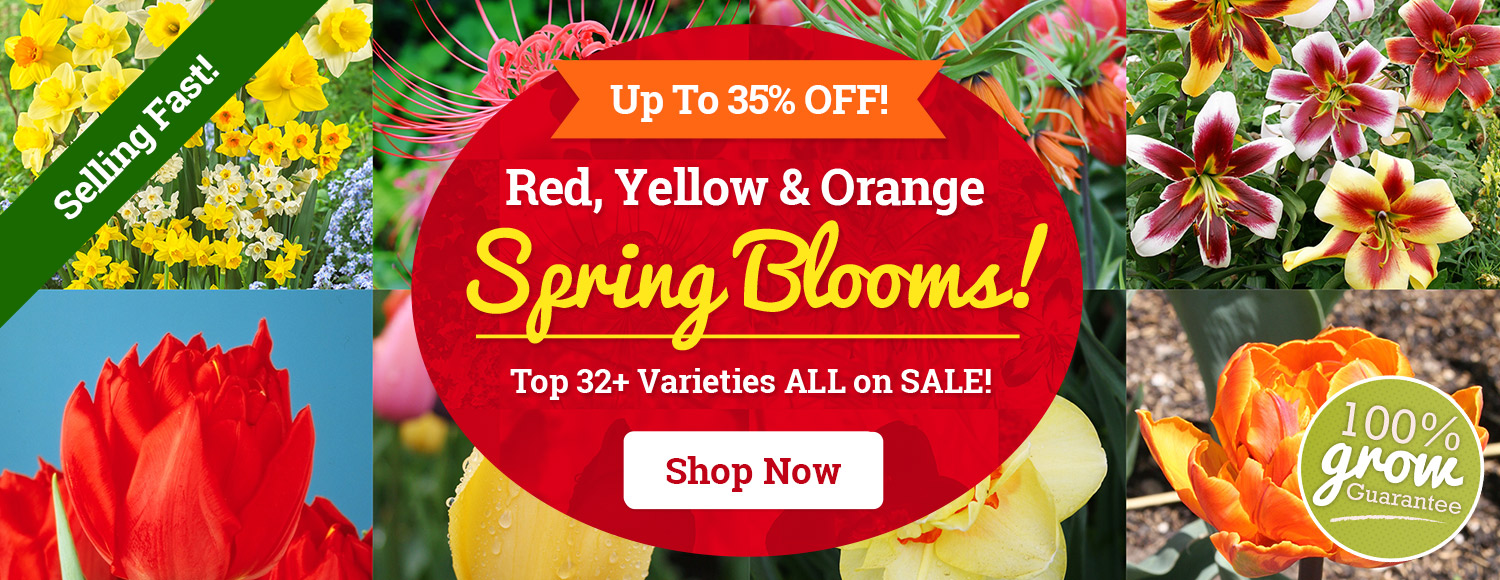 UP TO 35% OFF Red, Yellow and Orange Favorites!
